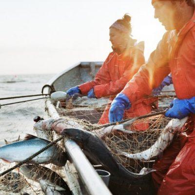 Curs Pescar