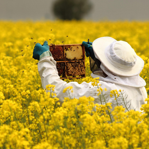 curs apicultor